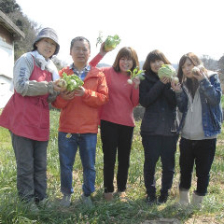 契約農場直送の有機野菜