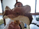 国産松茸関係者からは、特平などと呼ばれる最高級の新鮮な松茸。