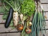 契約農家から届く新鮮野菜!!珍しいお野菜も随時入荷中!!