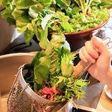 兵庫県産の採れたて旬野菜をさっとお湯にくぐらせて。