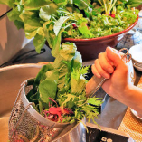 兵庫県産の採れたて旬野菜をさっとお湯にくぐらせて