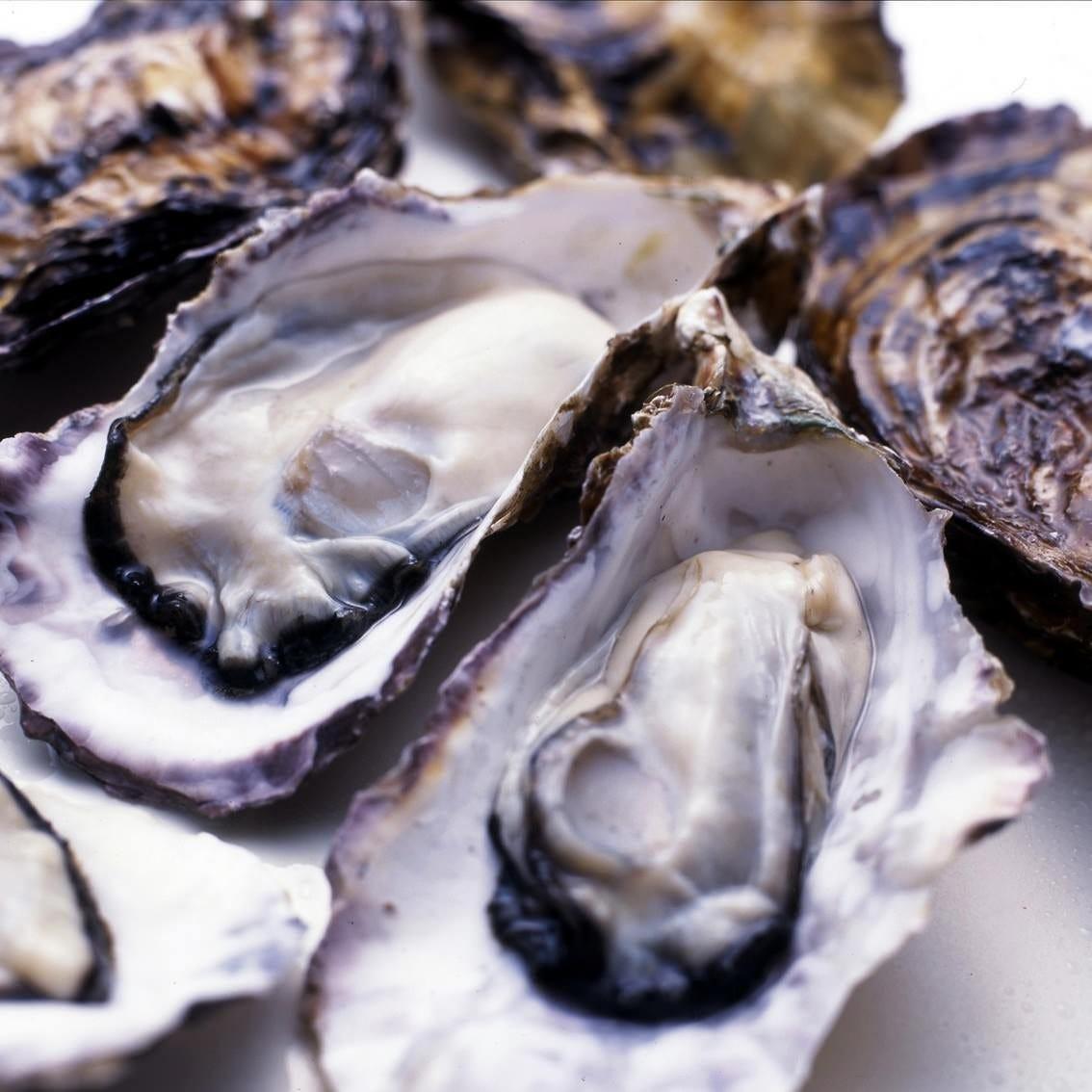 冬の風物詩【牡蠣】 こだわりの地酒と一緒に愉しむ。