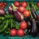 毎日農家さんから直送で届く朝どれ野菜たち