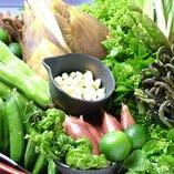 採りたての旬な新鮮野菜