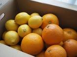 安全安心、有機100%で育ったしなまみレモン&旬の柑橘【尾道市瀬戸田町】