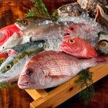九州や北海道まで全国各地から、その時期に一番美味しい魚介を直送仕入れ。その日仕入れた鮮魚は、刺身盛り合わせや焼き物、煮付けなどにしてご提供。