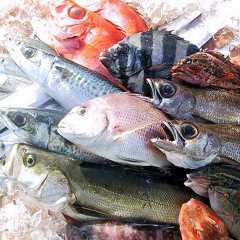 ● こだわりの、魚
