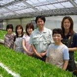 サンスイ生産組合直送手摘みサラダ野菜【愛知県】