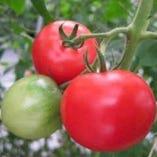トマト好きのためのトマト{ アップルスター }【浜松市】
