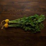 大地の恵み!有機農法の黄かぶ【石川県能登島】