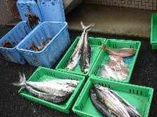 垂水漁港の昼網にてセリで買付け