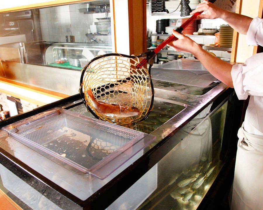生簀から取り出す活きのいい鮮魚達