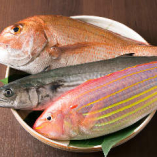 五島列島から直送の魚介は、味も見た目も良い上質なものばかり!