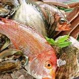 福岡県名産の姪浜漁港直送鮮魚【福岡県】