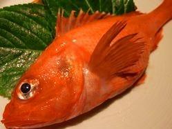 北海道の高級魚といえば、きんき!刺身や塩焼、煮付けも最高。