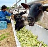 【西川農場】アスパラ羊/北海地鶏【美唄市】