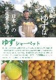 柚子のシャーベット