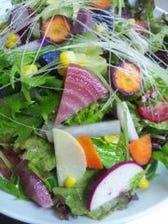 20種類の鎌倉野菜サラダ