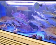 店内生簀から新鮮な活魚をお届け!