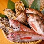 新鮮な魚がズラッと!刺・煮・揚などお好みで
