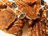 夏は毛蟹、冬は越前蟹やタラバ蟹を浜茹ででご提供【北海道 他】
