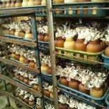 いろいろな生産者の美味しい食材をお届け。