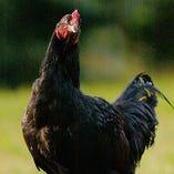 栃木県が誇る唯一のブランド地鶏「とちぎ軍鶏」を使用【栃木県】