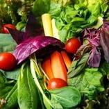 産地直送の新鮮野菜の料理【北海道】