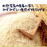 お米はオープン以来、【宮城産つや姫】を使っています【宮城県】