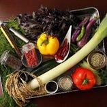 【在来野菜】【かほくイタリア野菜】【河北町、最上地方、鶴岡地方】