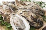 国産の選りすぐりの生牡蠣!! 産地・種類は時期で異なります!!