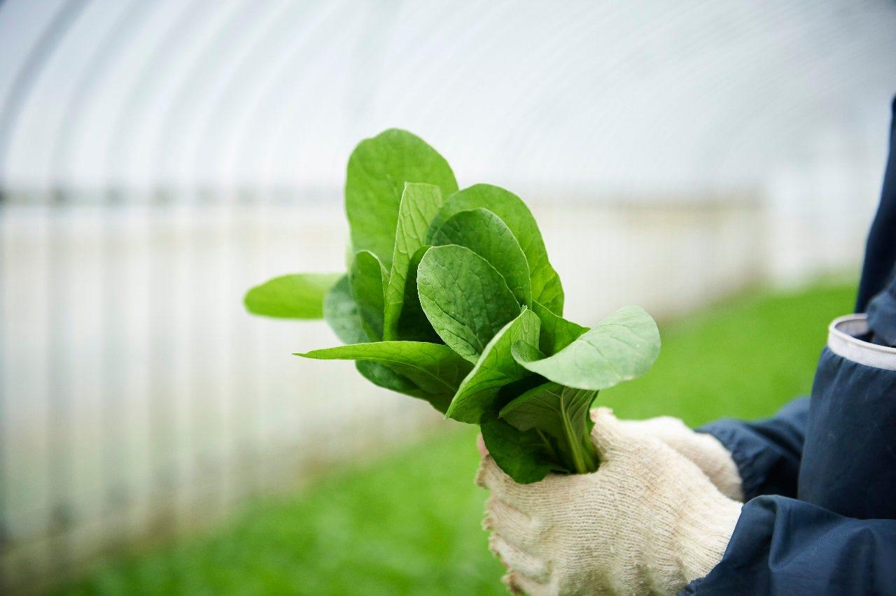 農家さんが大事に育てた有機野菜たち