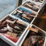 漁師直買 新鮮鮮魚取り扱い店