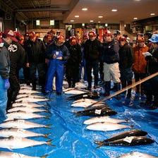 『西村』の親父が目利きで選ぶ鮮魚