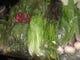 """有機栽培野菜""""オーガニック お客様への安心安全をご提供"""