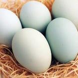 『幸せの青い卵』アローカナ【千葉県】