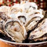 プリップリの宮城県女川産黄金牡蠣