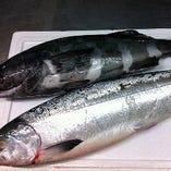 時鮭とアブラボウズ 旬の海産物が続々!