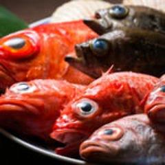 魚料理専門店だからこその自信の味