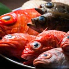 魚料理専門店 鮮菜活粋 河野
