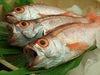 朝獲れ鮮魚と市場直送鮮魚