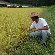 富山米コシヒカリを契約農家から