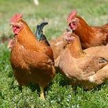 毎朝自社工場で朝挽きした新鮮な鶏【和歌山県】