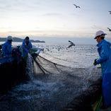 漁師や漁港から直接買付けるからこそ実現する質と価格。