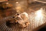 専用の蒸し器で仕上げる牡蠣はぷりっぷりです!