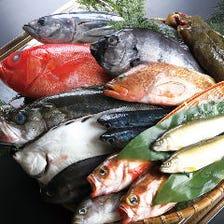湘南の味!相模湾鮮魚の数々