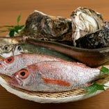 地元兵庫の獲れたて魚介類【兵庫県】