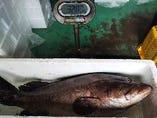 土佐宿毛港でセリ落とした、32キロの本九絵を使用した、九絵鍋!