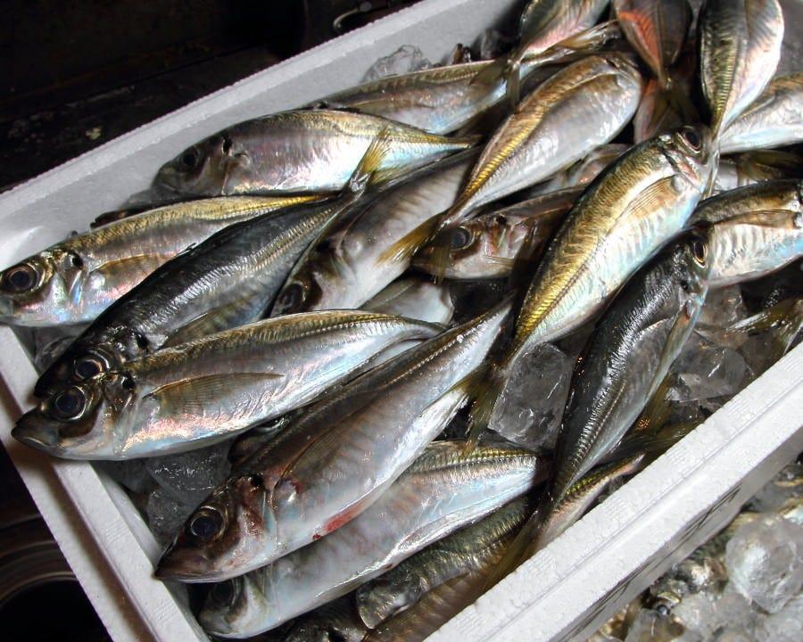 漁港直送!雑魚や自慢の新鮮な魚料理