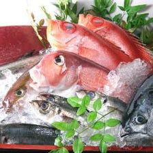 三陸 宮城&五島列島と築地直送鮮魚